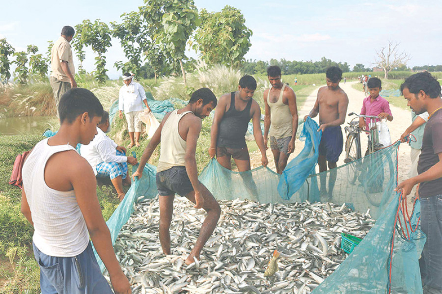 Rising demand gives boost to fish farming